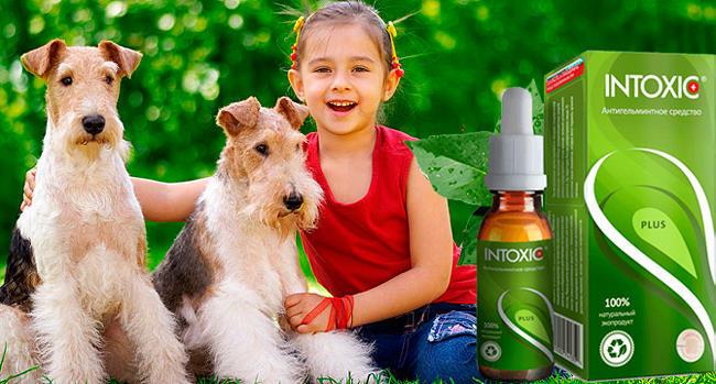 Intoxic Plus средство от паразитов и гельминтов действие