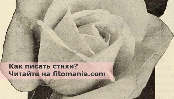 Как писать стихи начинающему автору, поэту - Фитомания ...